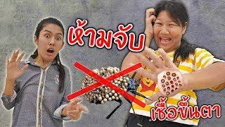 เเมลงระบาด !!! โดนตัวมือเป็นรู โปรดใช้วิจารณญาณในการเสพข่าว