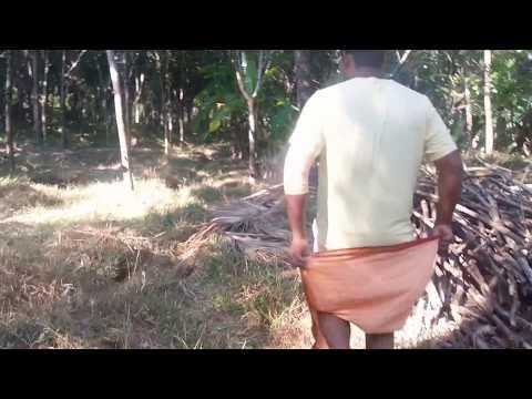 Rubber Plantation  GUIDANCE at Kerala
