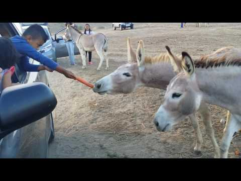 Wildlife donkey at moreno valley ca