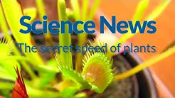 The secret speed of plants   Science News