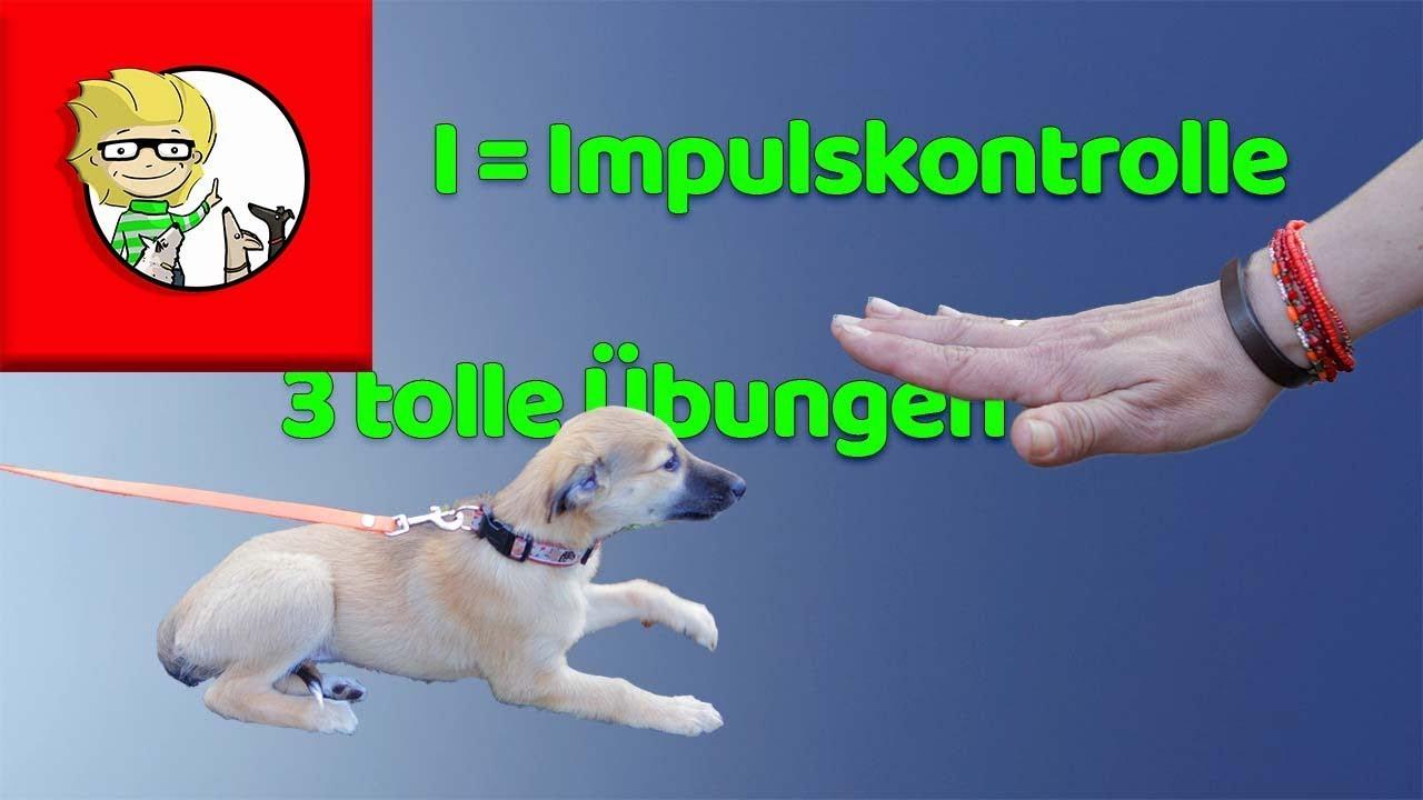 I = Impulskontrolle beim Hund - 3 tolle Übungen + Tipps!