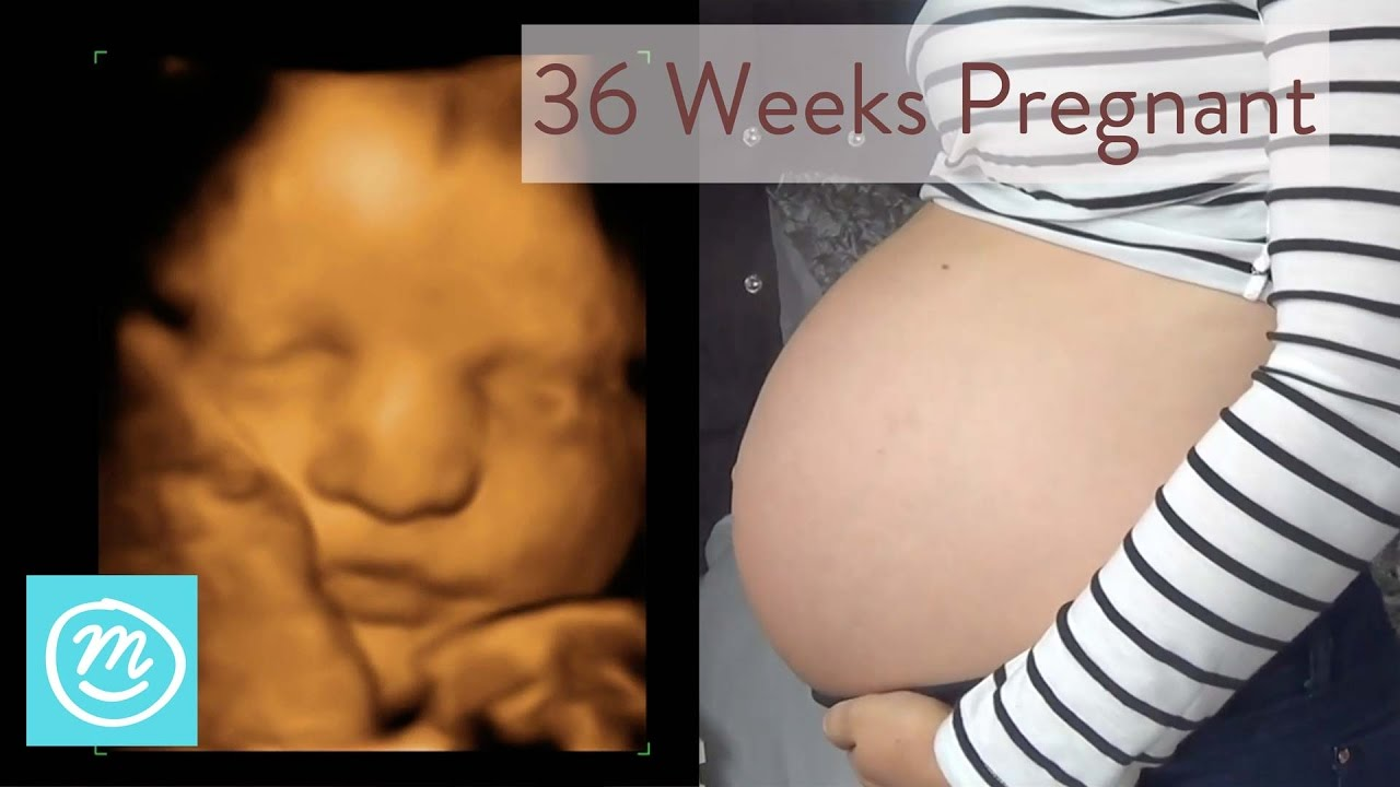 36 Weeks Pregnant: What To Expect - Channel Mum