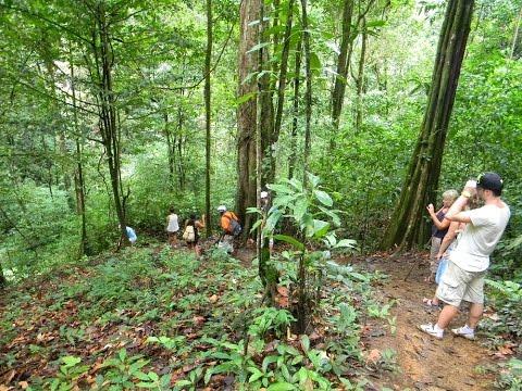 Brownsberg plus tour - Orange Travel Suriname