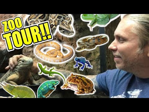 Complete Reptile Zoo Tour!! Cage By Cage!!!  Brian Barczyk