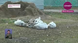 В СКО из-за птичьего гриппа планируют закрыть на карантин еще 6 поселков (21.09.20)