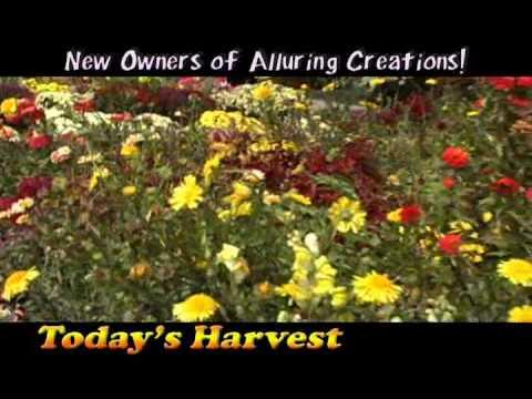 Today's Harvest Floral Shop | New Paris, Ohio