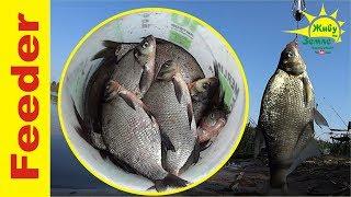 Утренняя рыбалка на донки. Нарезал чеснока в прикормку и снова донки дают леща! ))
