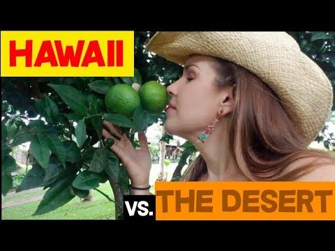 Hawaii vs. the Desert: Why Desert Lovers Are More Evolved