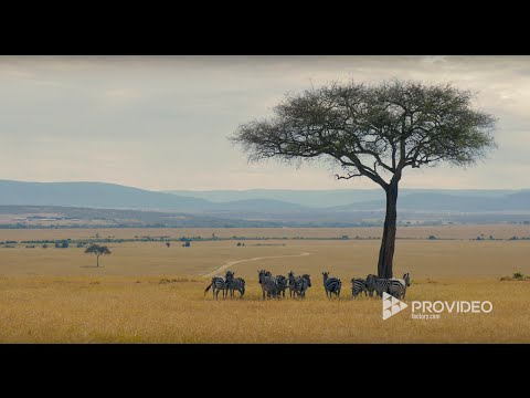 Masai Mara - Stock Footage