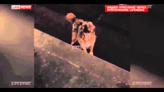 شرطي روسي يلقى حتفه خلال محاولته انقاذ كلب (فيديو)