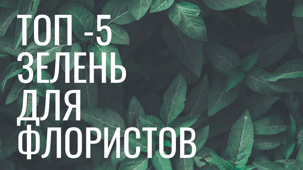 ТОП 5 зелени для флористов // школа флористики online