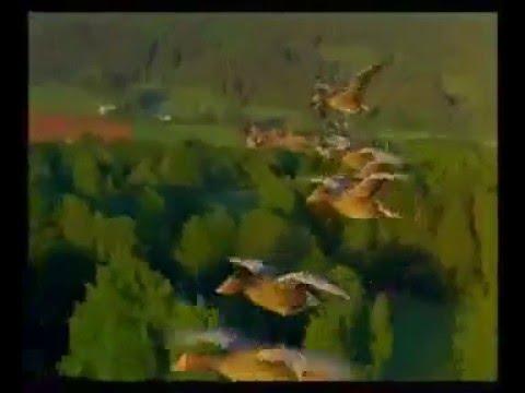 Hayvanlar Alemi ( BAHAR ILKOGRETIM OKULU) Bahar Senligi