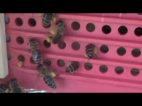 Podlaskie Miody - Poławianie Pyłku Kwiatowego