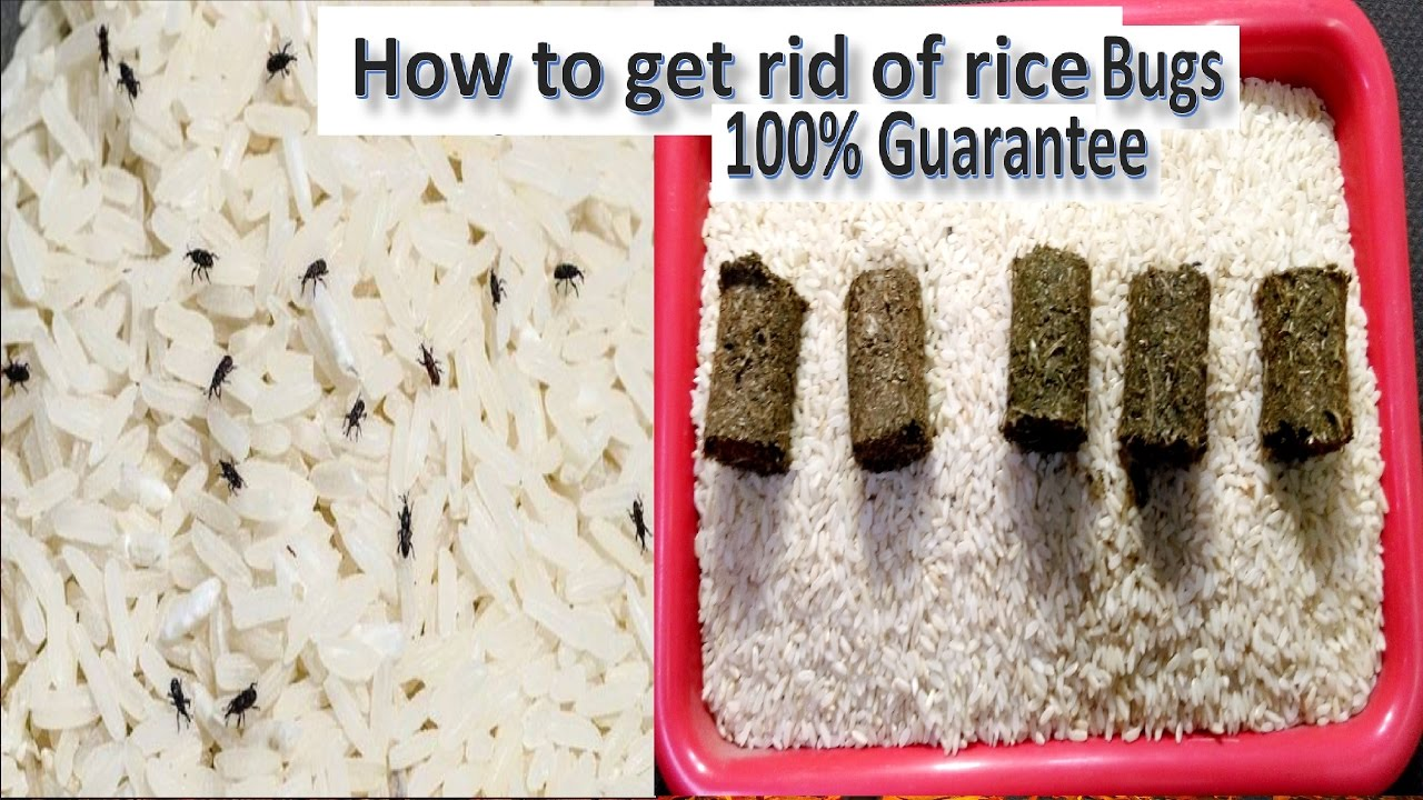 Latest Food Saving Tips In Telugu-How to prevent bugs in rice?