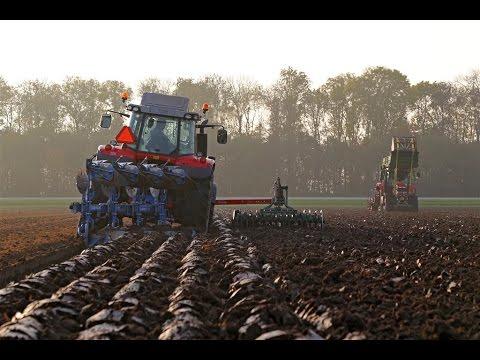 New Massey Ferguson 6616 & 7618 on tracks | Ploughing and planting bulbs