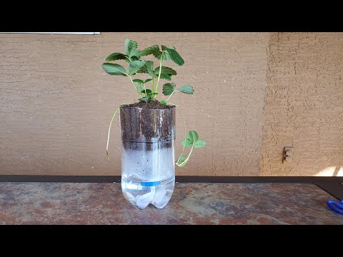 diy-2-liter-self-watering-plant-system