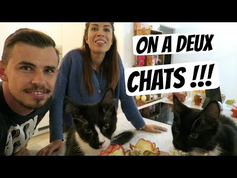On a deux chats !!!