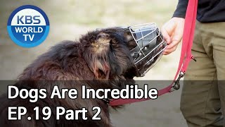 Dogs are incredible | 개는 훌륭하다 EP.19 Part 2 [SUB : ENG/2020.03.31]
