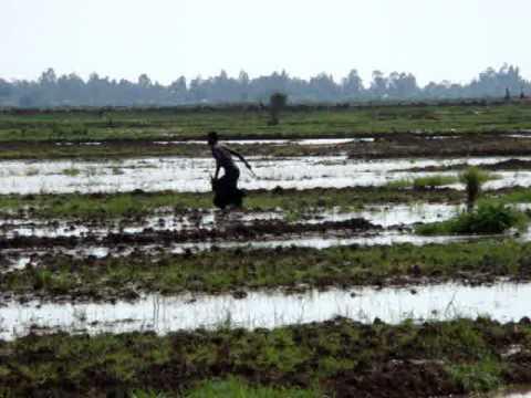 Poisoning of birds in Bunyala Kenya