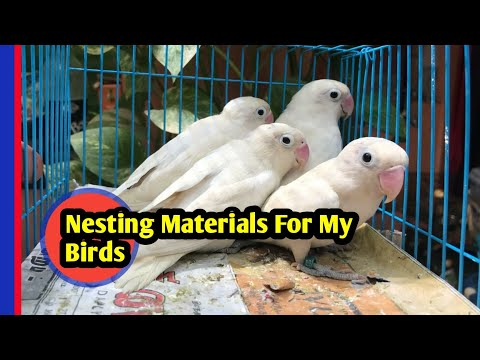 Nesting Materials For My African Love Birds|Tamil|