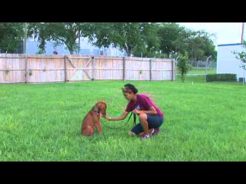 How To Train A Herding Puppy