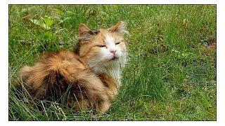 Рига. Лето. Кошки))) - мои фотографии