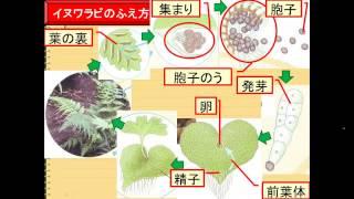 1-1-⑰シダ植物