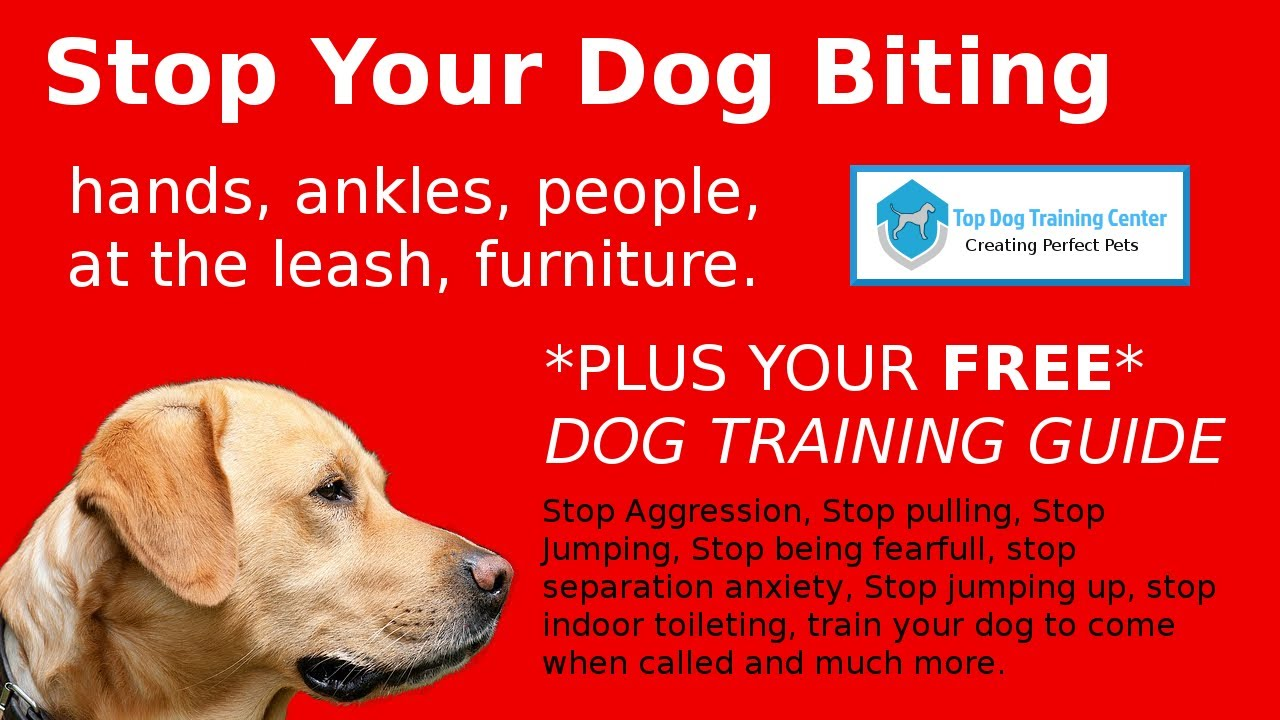 Stop Dog Biting How To Stop Puppies Biting Or Mouthing Youtube