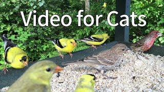 Video for Cats to Watch: Little Birds Party of West Canada