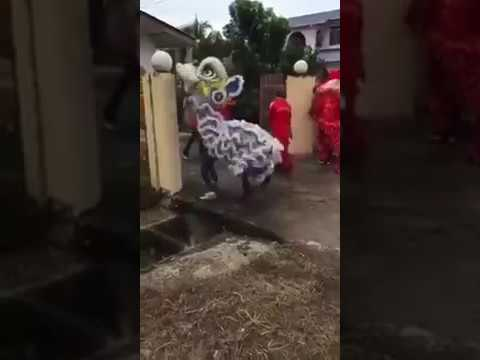 The most funniest lion dance in the world - when lion dancer fell in loved with the gate pole