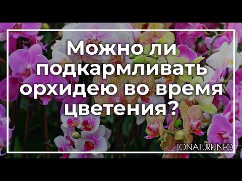 Можно ли подкармливать орхидею во время цветения? | toNature.Info