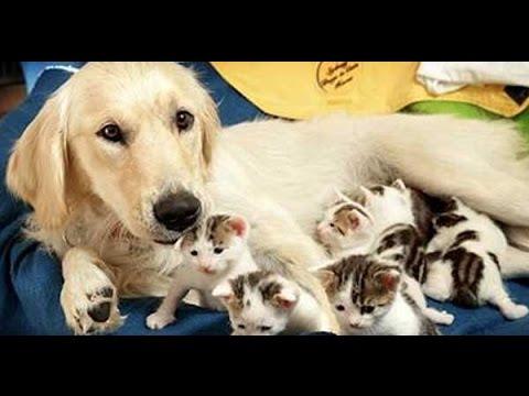 mother dog's feeding kittens.