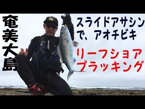 2月厳寒期のリーフショア プラッキングゲーム 奄美大島 スライドアサシンでアオチビキ Shore Casting