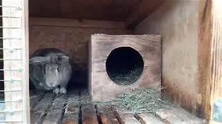 Обзор хозяйства ( Наши кролики)