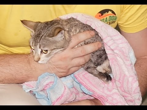 How to give cats a bath: Stray kittens get their first ever wash