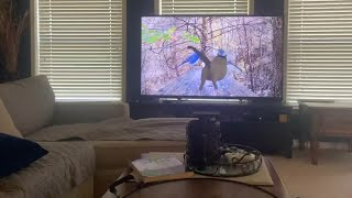 Cat Jumps Into TV After Trying To Catch Bird On Screen