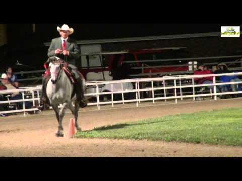 Missouri Fox Trotter Championship AVA 2014 WGC 5+ Arizona Outlaw's Margarita -Vance Vahle
