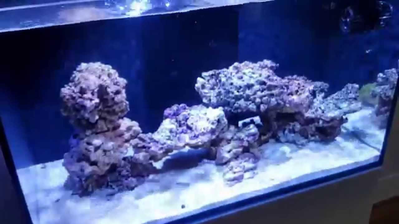 red sea reefer 250 marine aquarium youtube. Black Bedroom Furniture Sets. Home Design Ideas