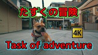 お友達のフレンチブルドッグ犬、たすく 君と散歩に行ってきました。 ま...