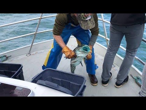Deep Sea Fishing Trip Newport Oregon