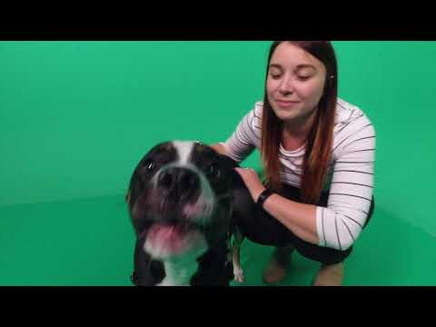 CGI Dog Day 2017