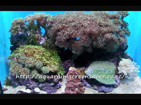 Aquarium Screensavers - Download A Lot Of Free Screensavers