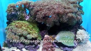 Aquarium screensavers - Download a lot of free screensavers