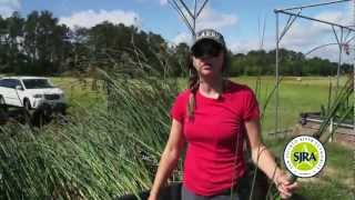 Lake Conroe Native Plant Restoration Program - San Jacinto River Authority