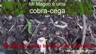 Meu bichinho de estimação se chama Mr Magoo