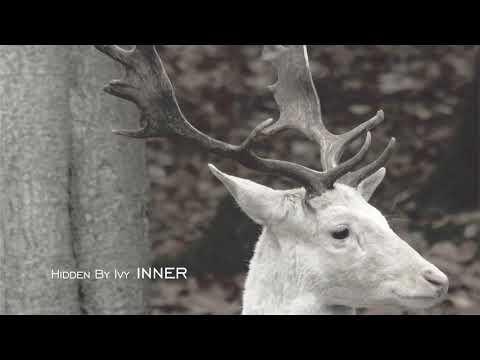 """Hidden By Ivy """"Inner"""" [Full Album]"""