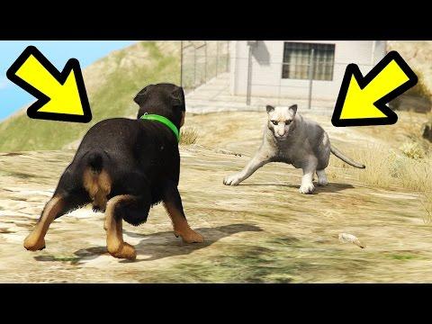 GTA 5 - Chop vs. Mountain Lion! (Who Survives?)