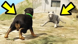 GTA 5 - Chop vs. Mountain Lion! (Who Survives?)
