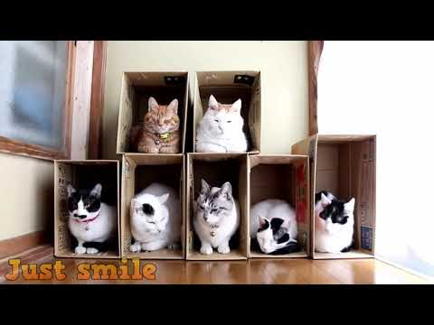 Funny And Cute Cats   Funniest Cats Compilation 2019