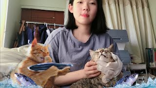 (ENG) Extraordinary story of ordinary daily lives of 4 stray cats and Island girl